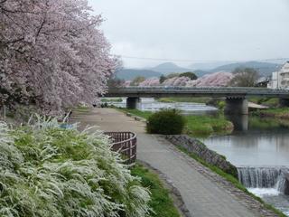 0001出町橋から葵橋を見る.jpeg