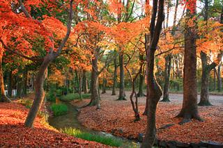 糺の森紅葉2.jpeg