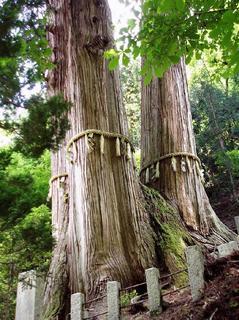 花背の三本杉3.jpeg
